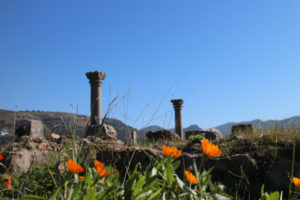 Volubilis columns over blooming calendula.